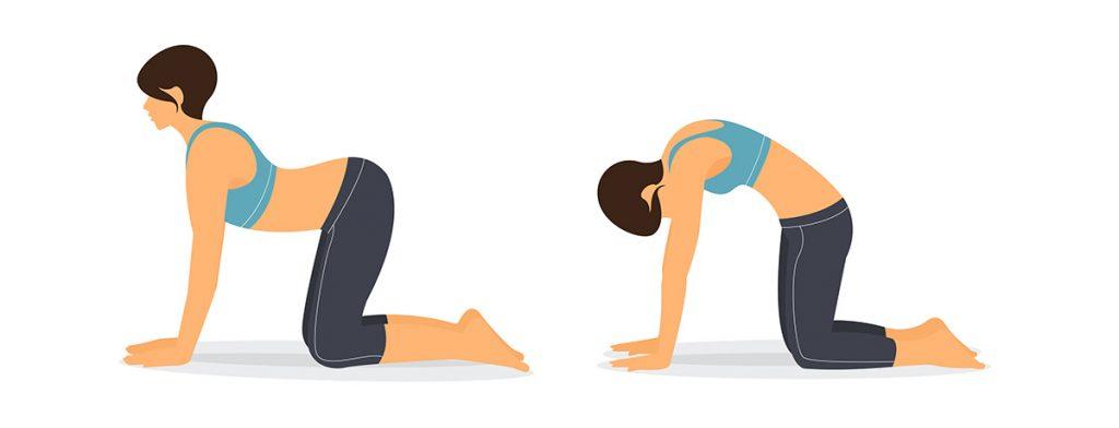 Postura gato-vaca yoga